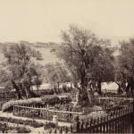 Гетсиманската градина в Йерусалим 2 Април 1862