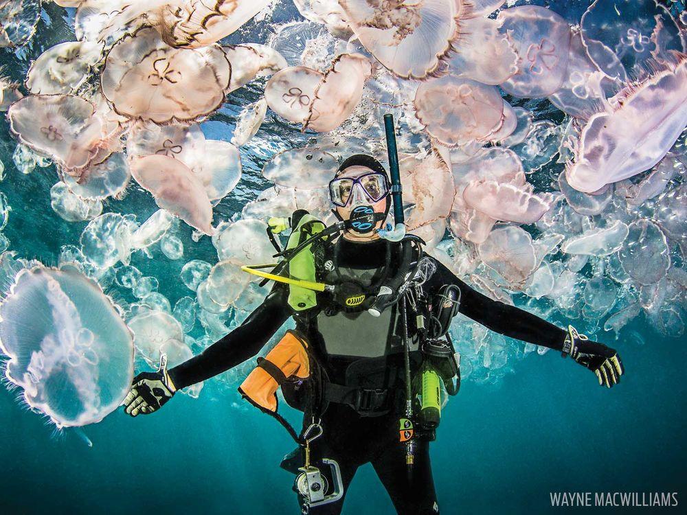 Лунни медузи в Юпитер, Флорида