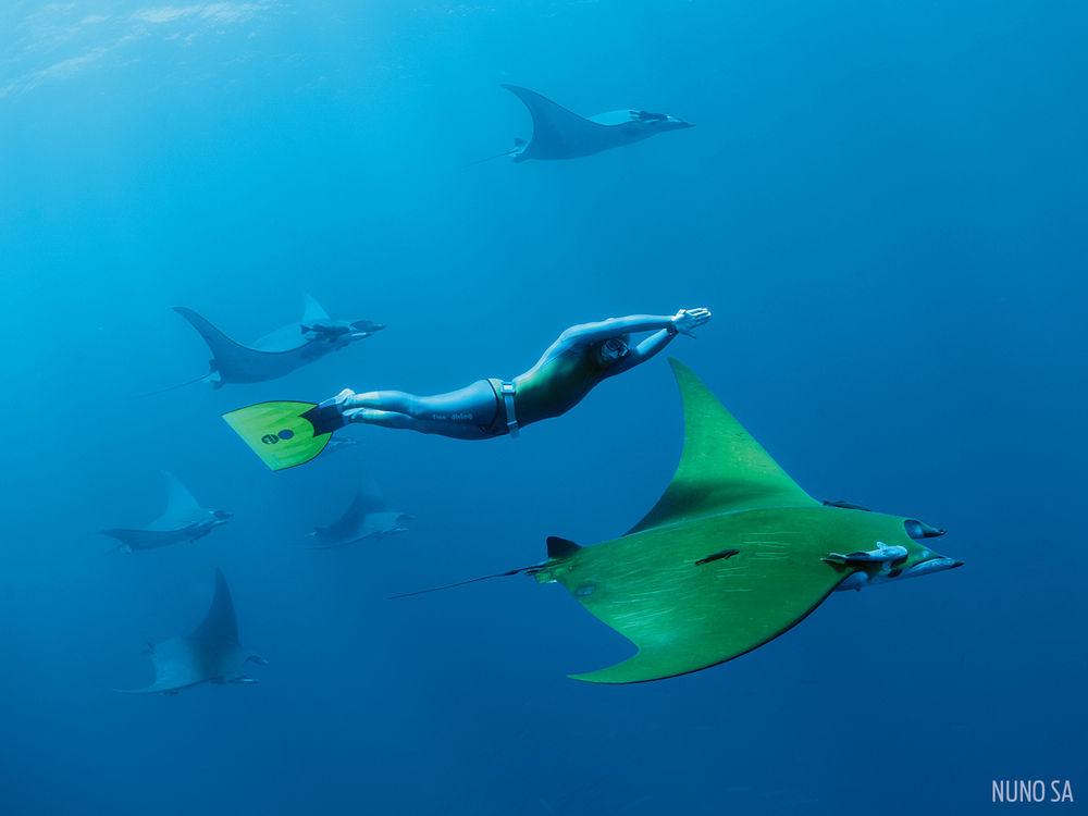 Дяволска риба на Азорските острови
